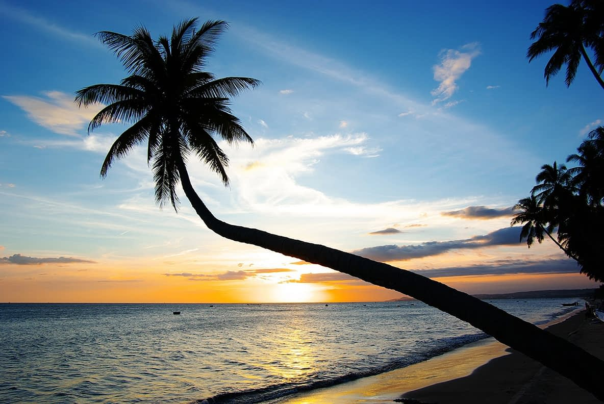 Maceió, Alagoas - Coqueiro na praia
